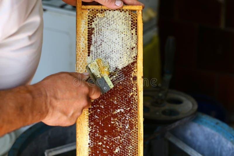 Χτένα μελιού Ο μελισσοκόμος εκπωματίζει την κηρήθρα με την εκπωμάτιση του δικράνου Έννοια μελισσοκομίας Αυθεντική εικόνα τρόπου ζ στοκ φωτογραφία με δικαίωμα ελεύθερης χρήσης