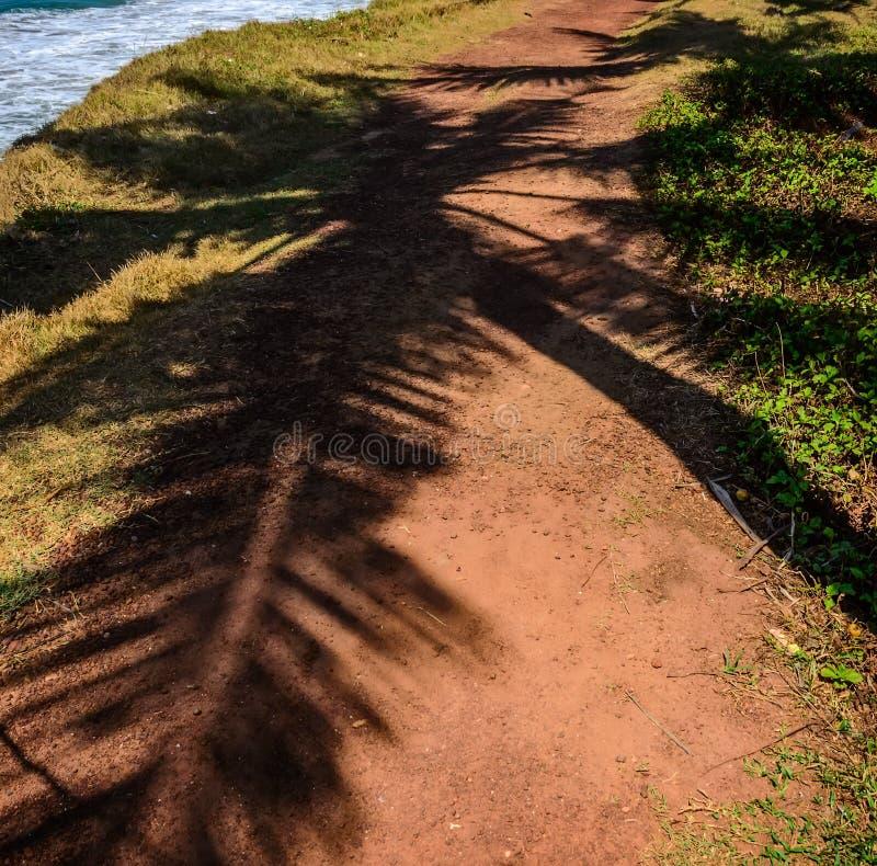 Χυτή φύλλα σκιά φοινίκων σε μια πορτοκαλιά άμμο στοκ φωτογραφίες