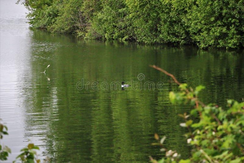 Χωριάτης στη λίμνη με τα ψάρια που πηδά από το νερό στοκ φωτογραφίες