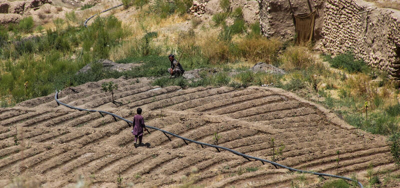 Χωρικοί του Αφγανιστάν που απασχολούνται στην πλοκή landctll τους του σχολείου στοκ εικόνες