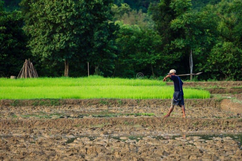 Χωρικός στο Λάος που περπατά στους τομείς στοκ φωτογραφίες