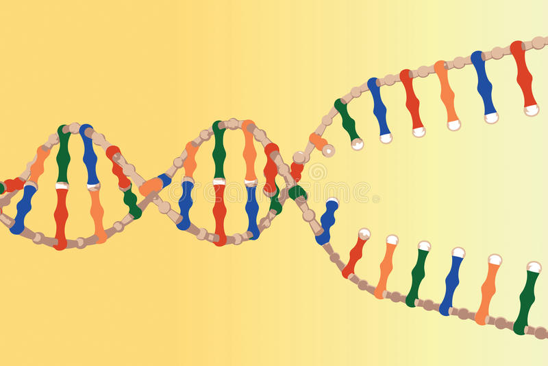 χωρισμένα DNA σκέλη διανυσματική απεικόνιση