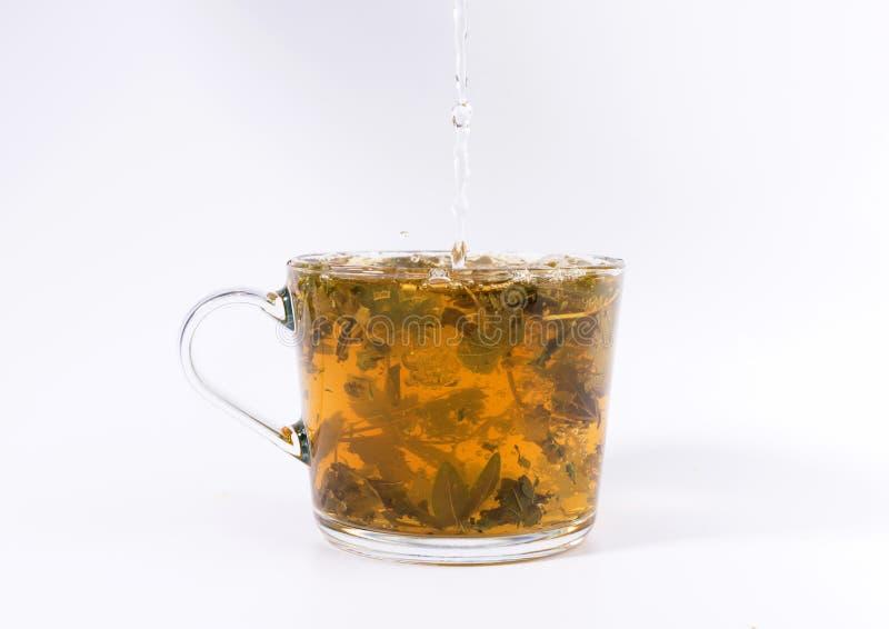 Χύνοντας ζεστό νερό στο φλυτζάνι γυαλιού με το τσάι στοκ εικόνες