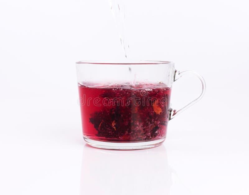 Χύνοντας ζεστό νερό στο φλυτζάνι γυαλιού με hibiscus το τσάι, που απομονώνεται στο λευκό στοκ φωτογραφίες