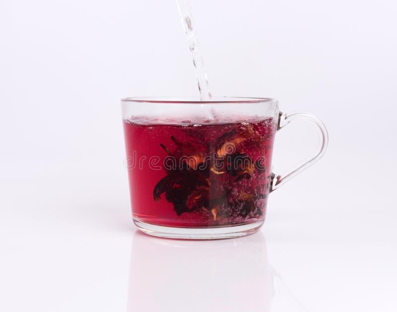Χύνοντας ζεστό νερό στο φλυτζάνι γυαλιού με hibiscus το τσάι, που απομονώνεται στο λευκό στοκ εικόνα