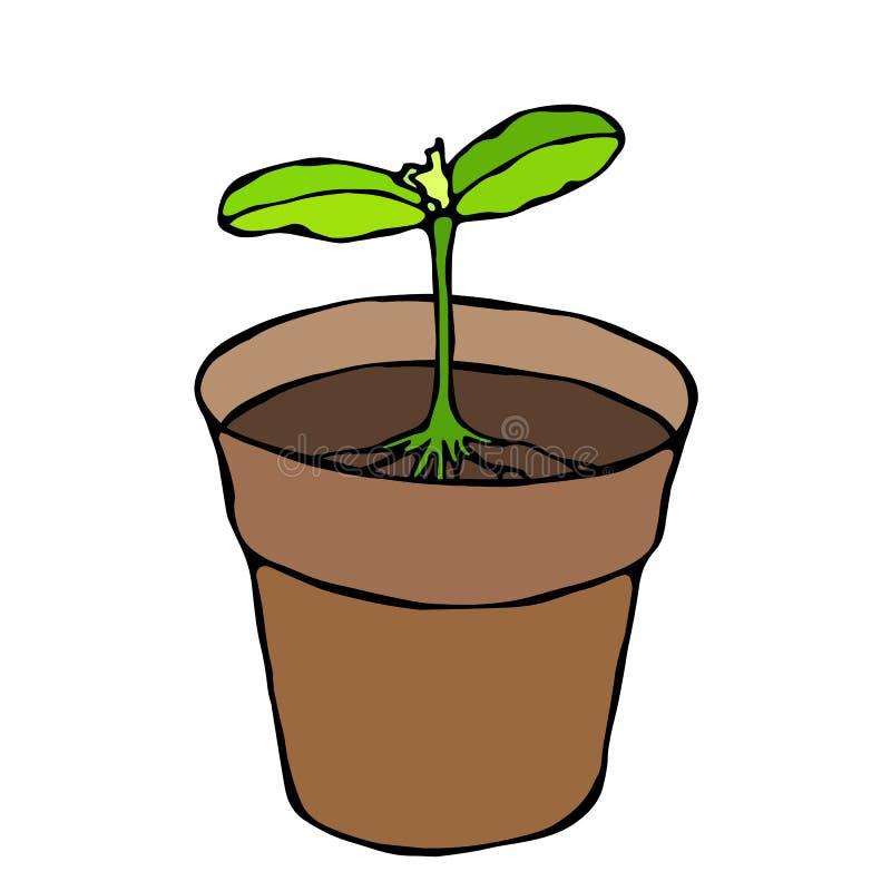 χώμα δοχείων λουλουδιών Σπόρος, νεαρός βλαστός με δύο φύλλα και ρίζα Flowerpot για τις βλαστάνοντας εγκαταστάσεις σπορόφυτο Φάσ στοκ εικόνες