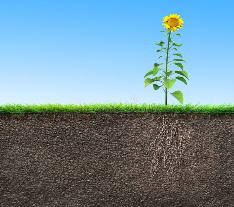 Χώμα με τις ρίζες διανυσματική απεικόνιση