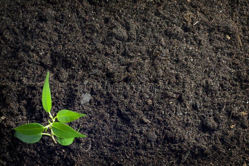 χώμα φυτών ανασκόπησης στοκ εικόνες