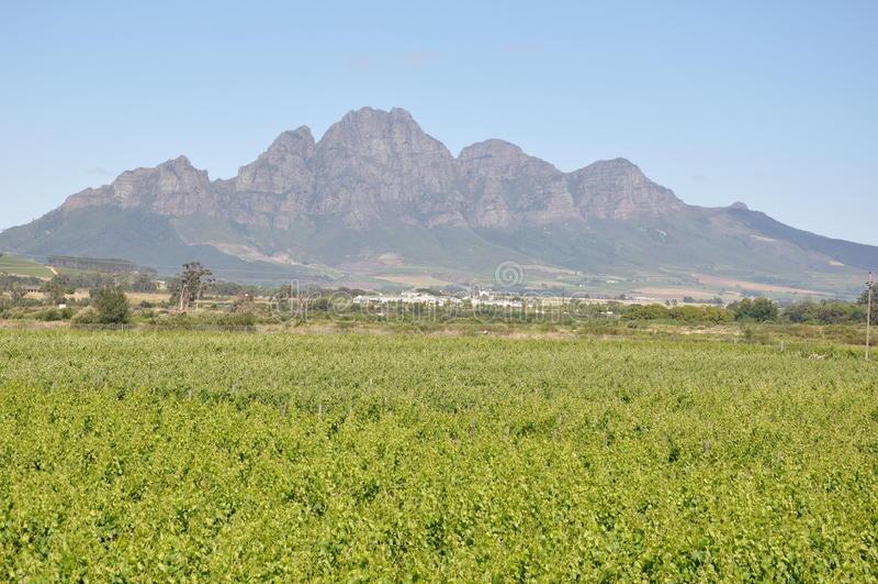 Χώρα κρασιού της Νότιας Αφρικής Stellenbosch στοκ φωτογραφίες με δικαίωμα ελεύθερης χρήσης