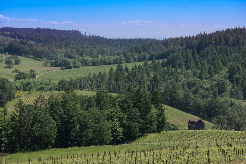 Χώρα κρασιού του Όρεγκον στοκ εικόνα με δικαίωμα ελεύθερης χρήσης