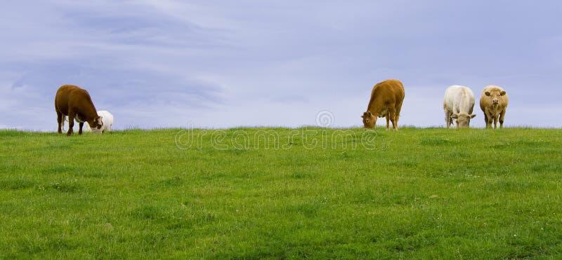 χώρα galway Ιρλανδία στοκ εικόνα