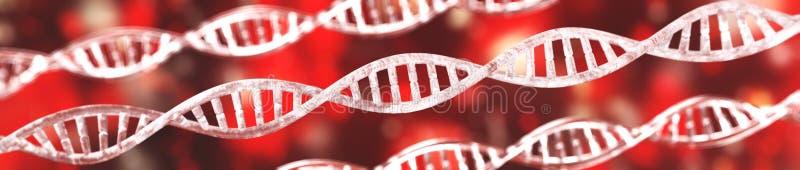 Χ χρωμόσωμα και DNA ελεύθερη απεικόνιση δικαιώματος