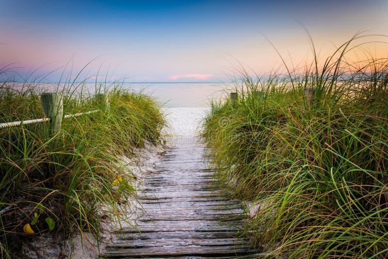 Χλόες και φράκτης κατά μήκος της πορείας στην παραλία Smathers στο ηλιοβασίλεμα, βασικό εμείς στοκ εικόνες