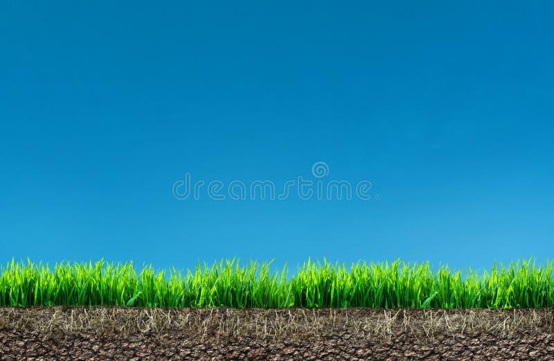 Χλόη με τις ρίζες και το χώμα ελεύθερη απεικόνιση δικαιώματος
