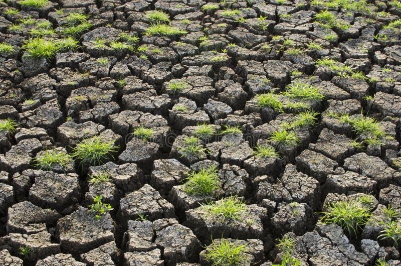 Χλόη στη ραγισμένη γη στοκ φωτογραφία με δικαίωμα ελεύθερης χρήσης
