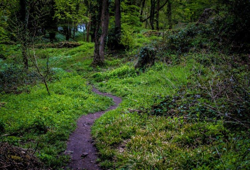 Χλόη στο δάσος στοκ εικόνες