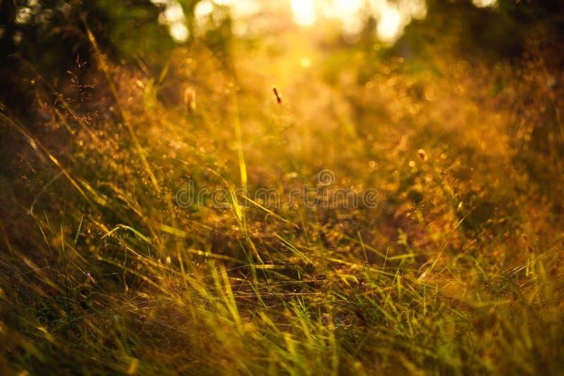 Χλόη στο ηλιοβασίλεμα στοκ φωτογραφία με δικαίωμα ελεύθερης χρήσης