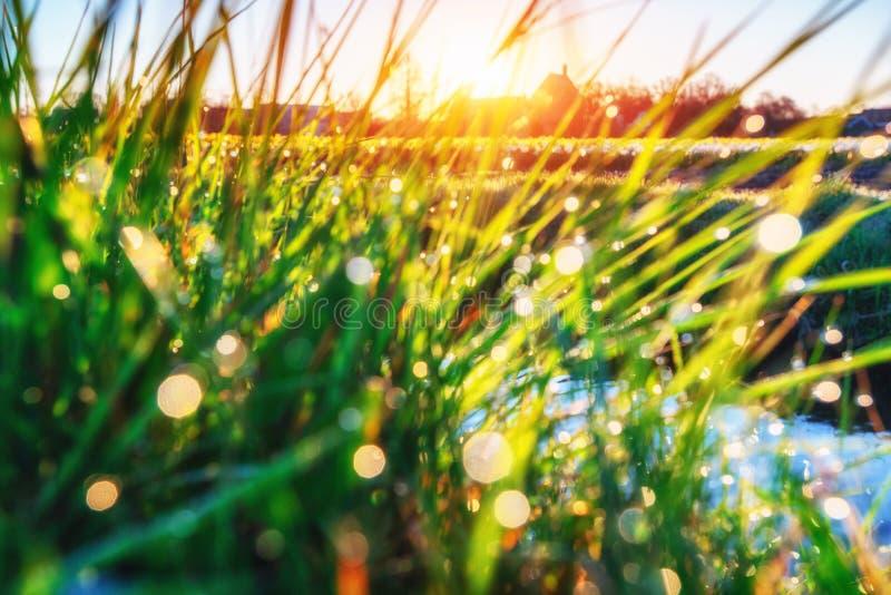 Χλόη Φρέσκο πράσινο ελατήριο με την κινηματογράφηση σε πρώτο πλάνο πτώσεων δροσιάς ήλιος SOF στοκ φωτογραφίες με δικαίωμα ελεύθερης χρήσης