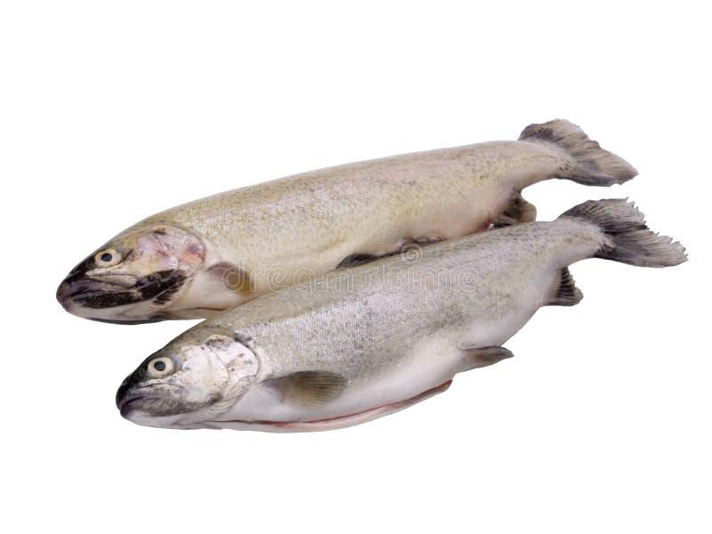 ψάρια ακατέργαστα στοκ φωτογραφίες με δικαίωμα ελεύθερης χρήσης