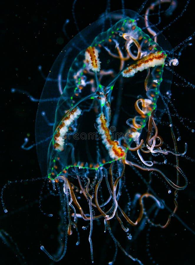 Ψάρια ζελατίνας Spacial στοκ φωτογραφίες με δικαίωμα ελεύθερης χρήσης