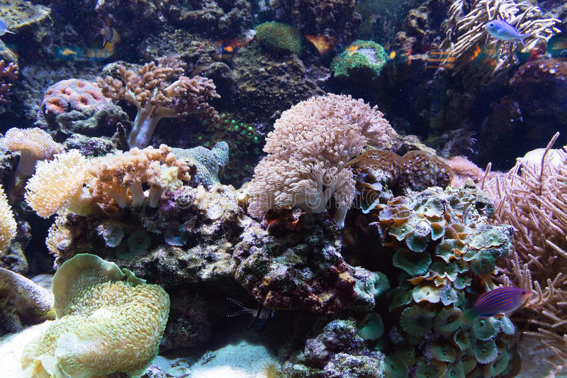 Ψάρια θάλασσας τροπικά στοκ εικόνα με δικαίωμα ελεύθερης χρήσης