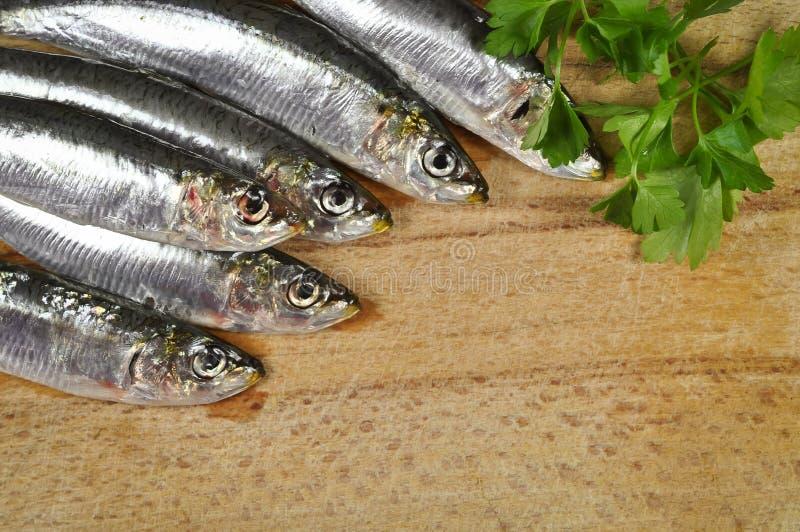 Ψάρια θάλασσας με το φρέσκο μαϊντανό στοκ εικόνα με δικαίωμα ελεύθερης χρήσης