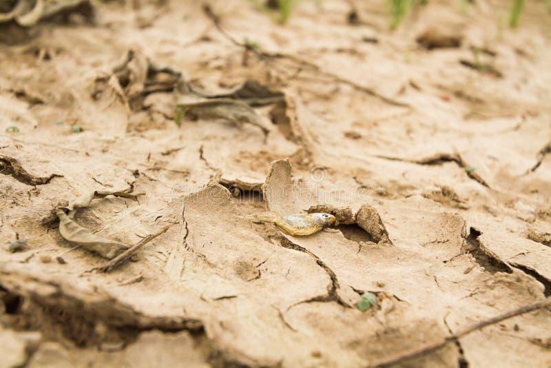 Ψάρια θανάτου στο ξηρό χώμα στοκ εικόνες