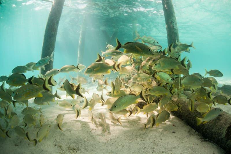 Ψάρια κάτω από την αποβάθρα στοκ εικόνα με δικαίωμα ελεύθερης χρήσης