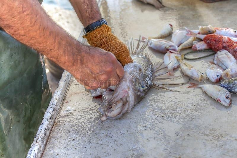 Ψάρια καθαρισμού στοκ φωτογραφίες