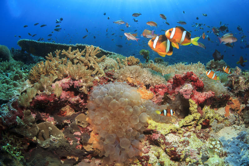 Ψάρια και κοραλλιογενής ύφαλος στοκ φωτογραφίες με δικαίωμα ελεύθερης χρήσης