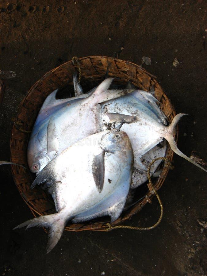 ψάρια καλαθιών στοκ φωτογραφία με δικαίωμα ελεύθερης χρήσης