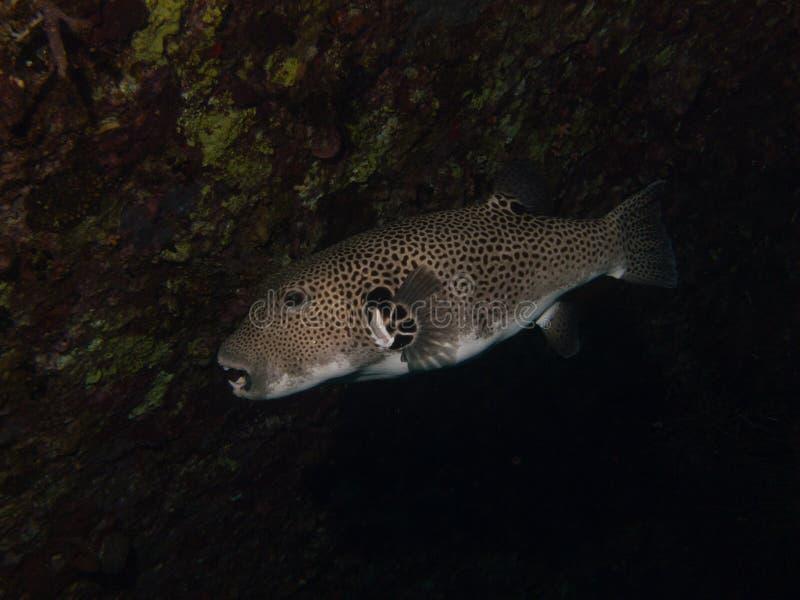 Ψάρια καπνιστών που κρύβουν σε μια σκιά στοκ φωτογραφία