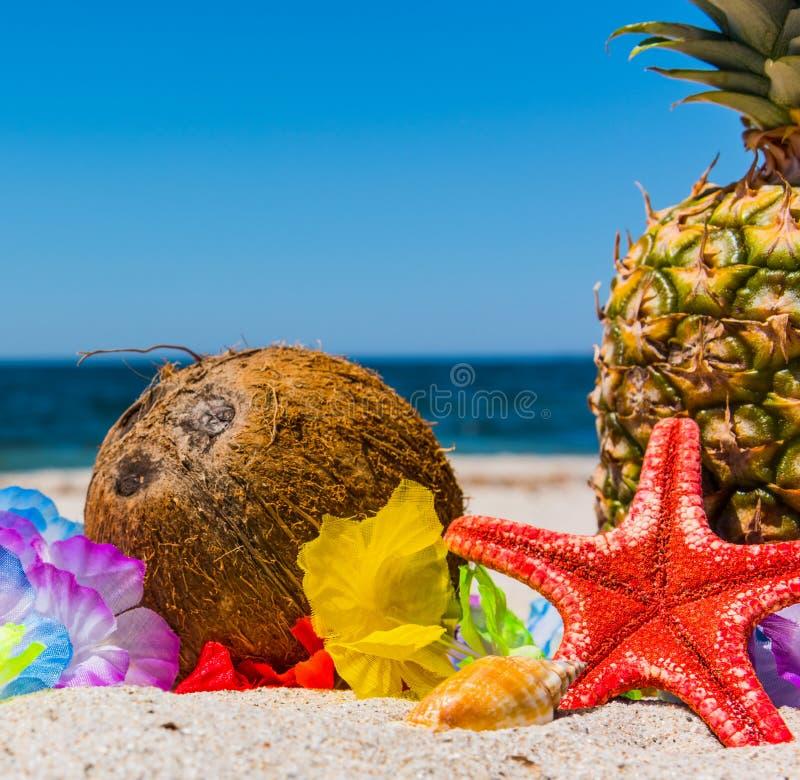 Ψάρια καρύδων και αστεριών στην άμμο στοκ εικόνες με δικαίωμα ελεύθερης χρήσης