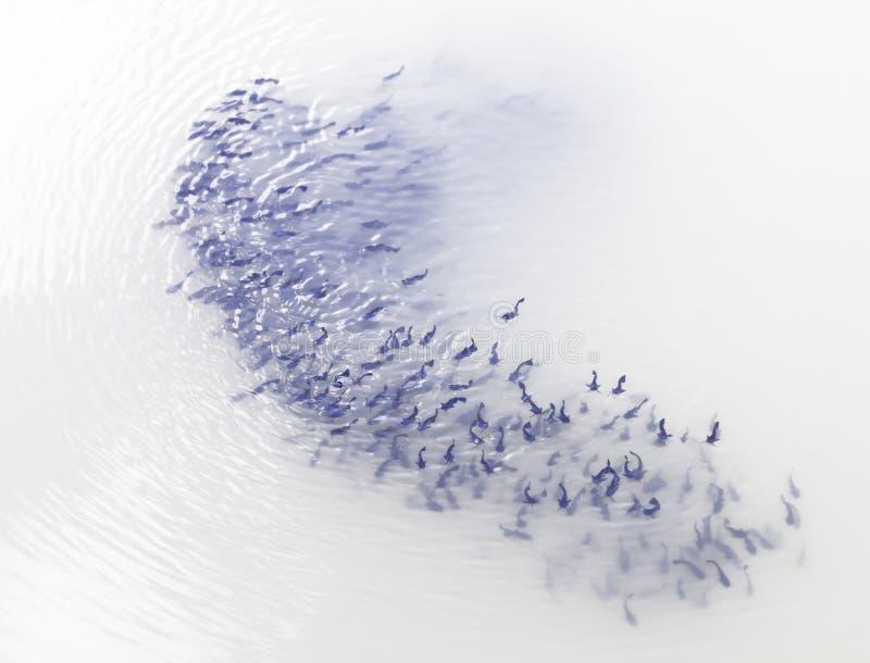 Ψάρια κοπαδιών στοκ φωτογραφίες
