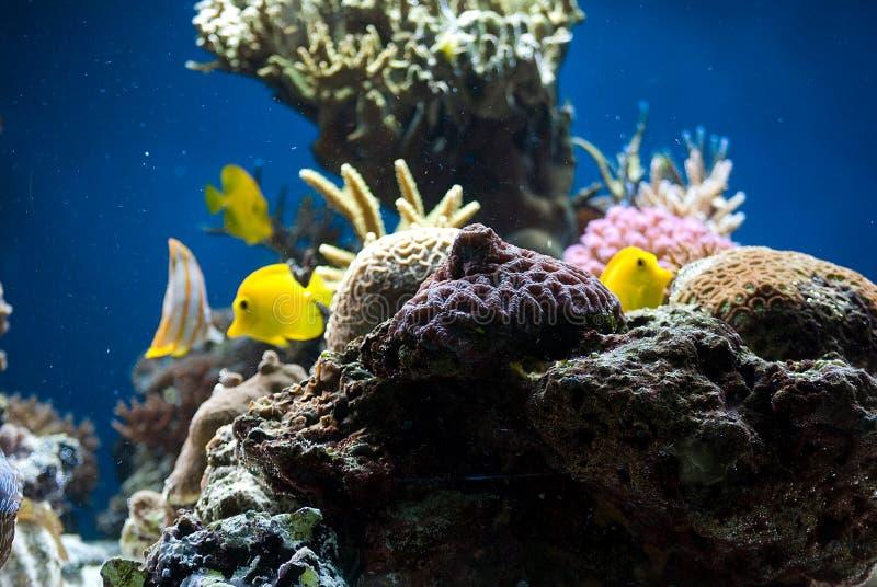 ψάρια κοραλλιών ενυδρεί&omeg στοκ φωτογραφία με δικαίωμα ελεύθερης χρήσης
