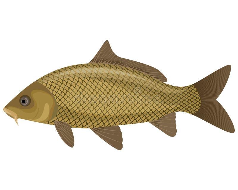 Ψάρια κυπρίνων διανυσματική απεικόνιση
