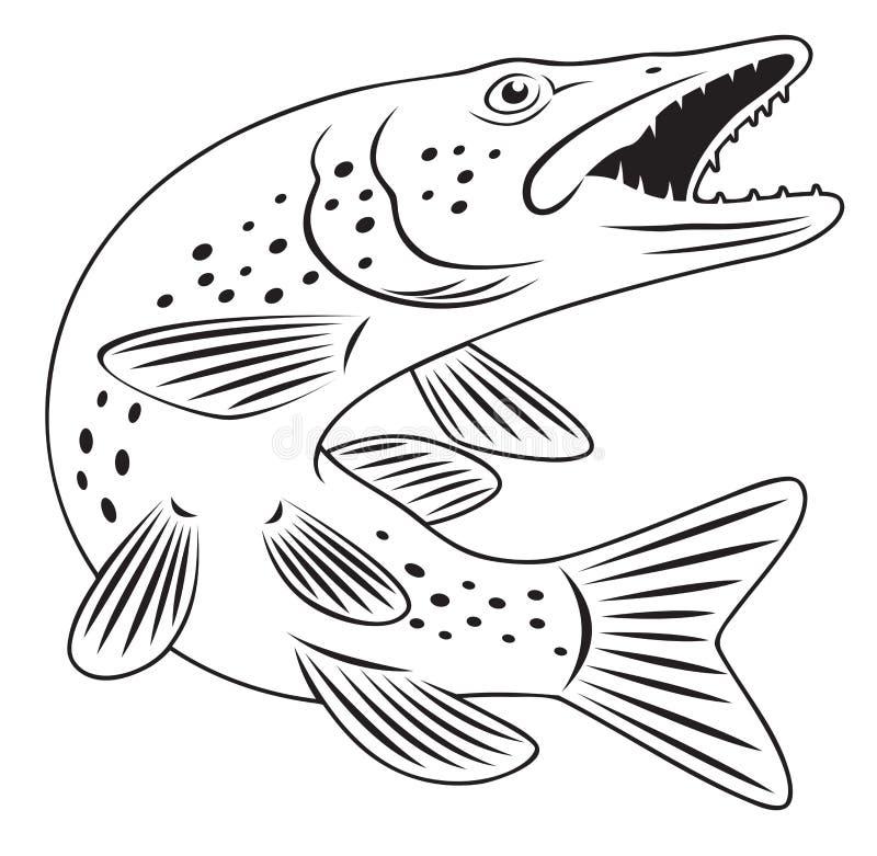 Ψάρια λούτσων απεικόνιση αποθεμάτων
