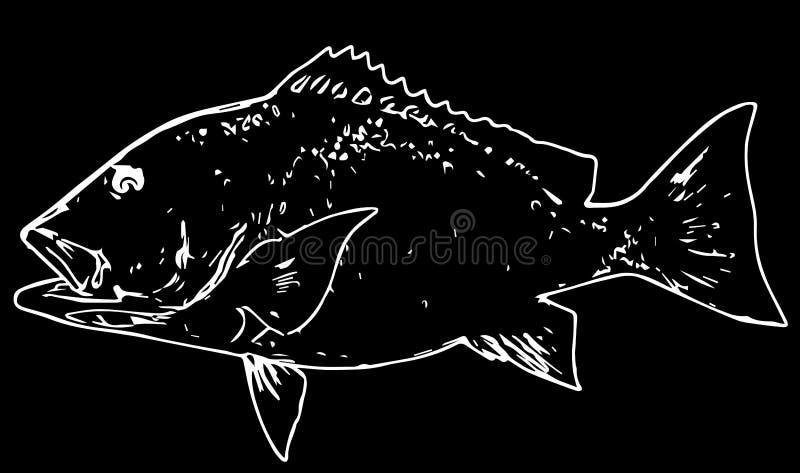 Ψάρια λυθρινιών που αλιεύουν στο μαύρο υπόβαθρο ελεύθερη απεικόνιση δικαιώματος