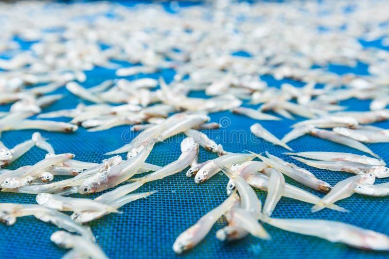 ψάρια μικρά στοκ εικόνα