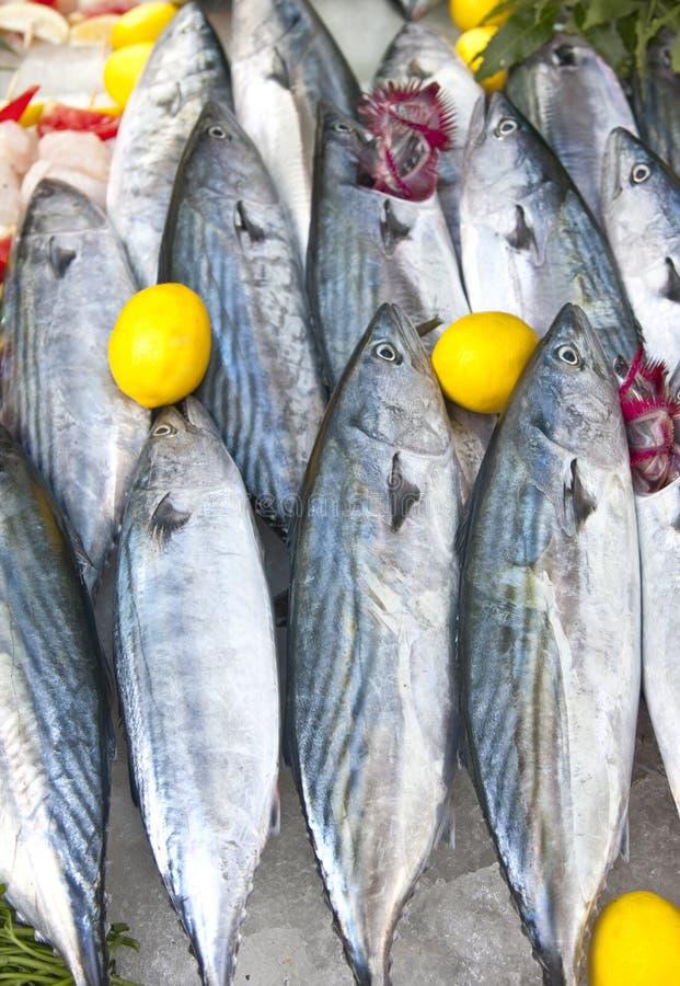 ψάρια παλαμίδων ακατέργασ&t στοκ φωτογραφίες