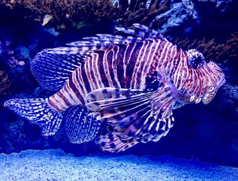 ψάρια περίεργα στοκ φωτογραφίες με δικαίωμα ελεύθερης χρήσης