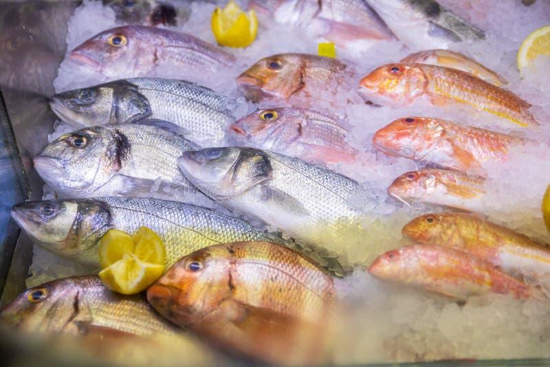 Ψάρια που ποικίλλονται φρέσκα στον πάγο στοκ φωτογραφίες