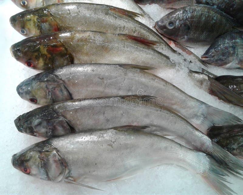 Ψάρια που πωλούνται φρέσκα από την αγορά κατεψυγμένα ψάρια στοκ εικόνα
