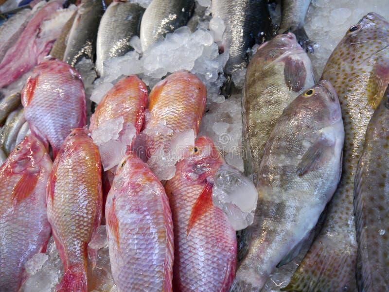 Ψάρια που πωλούνται φρέσκα στοκ φωτογραφία με δικαίωμα ελεύθερης χρήσης