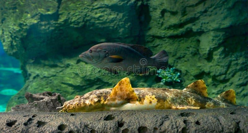 Ψάρια πυθμένων της θάλασσας στοκ φωτογραφία