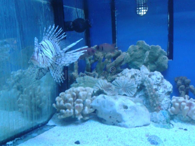 Ψάρια σε ένα ενυδρείο στοκ εικόνες με δικαίωμα ελεύθερης χρήσης