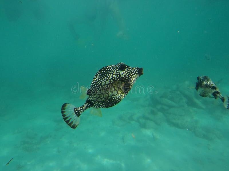 Ψάρια σημείων στοκ εικόνες