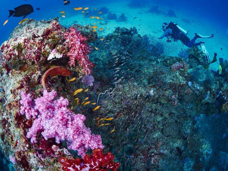 Ψάρια σκοπέλων και grouper κοραλλιών στοκ εικόνες