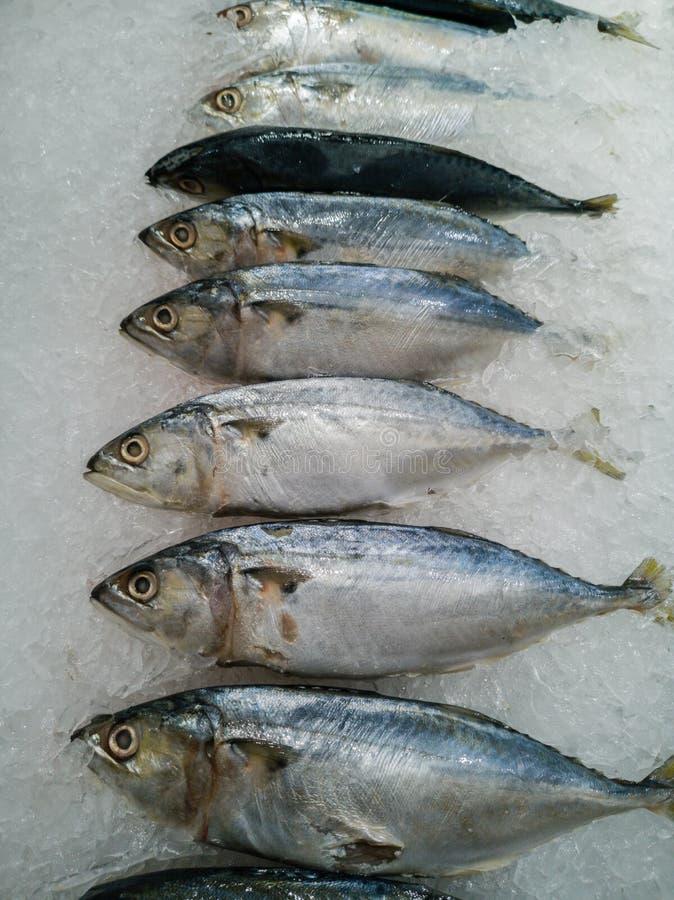 Ψάρια σκουμπριών στη νιφάδα πάγου στοκ φωτογραφία με δικαίωμα ελεύθερης χρήσης