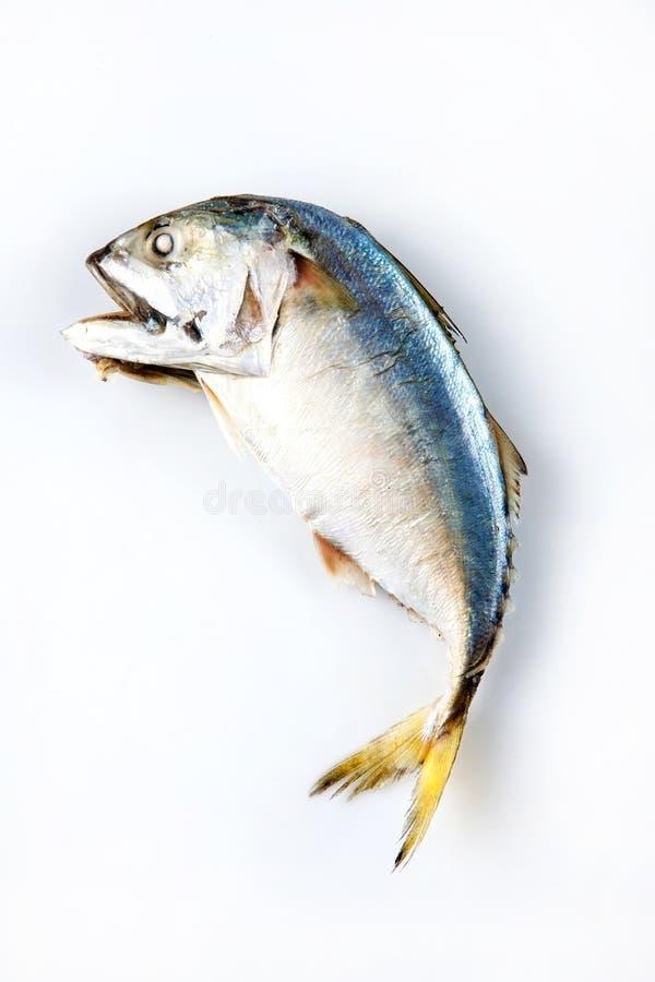 Ψάρια σκουμπριών στον ατμό, ψάρια σκουμπριών που βράζουν στον ατμό στο άσπρο υπόβαθρο στοκ φωτογραφία